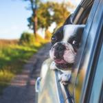 ¿Viajas con una mascota?